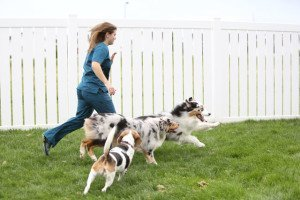 A woman running with three white, black and brown dogs